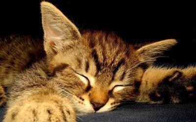 Wie viel Schlaf ist gesund?