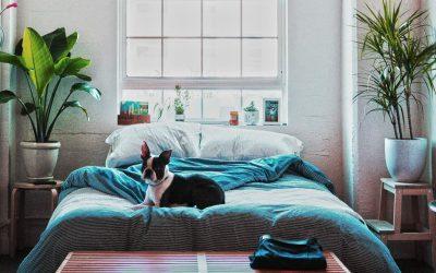 Pflanzen im Schlafzimmer: Auf geht's ins grüne Schlafgemach