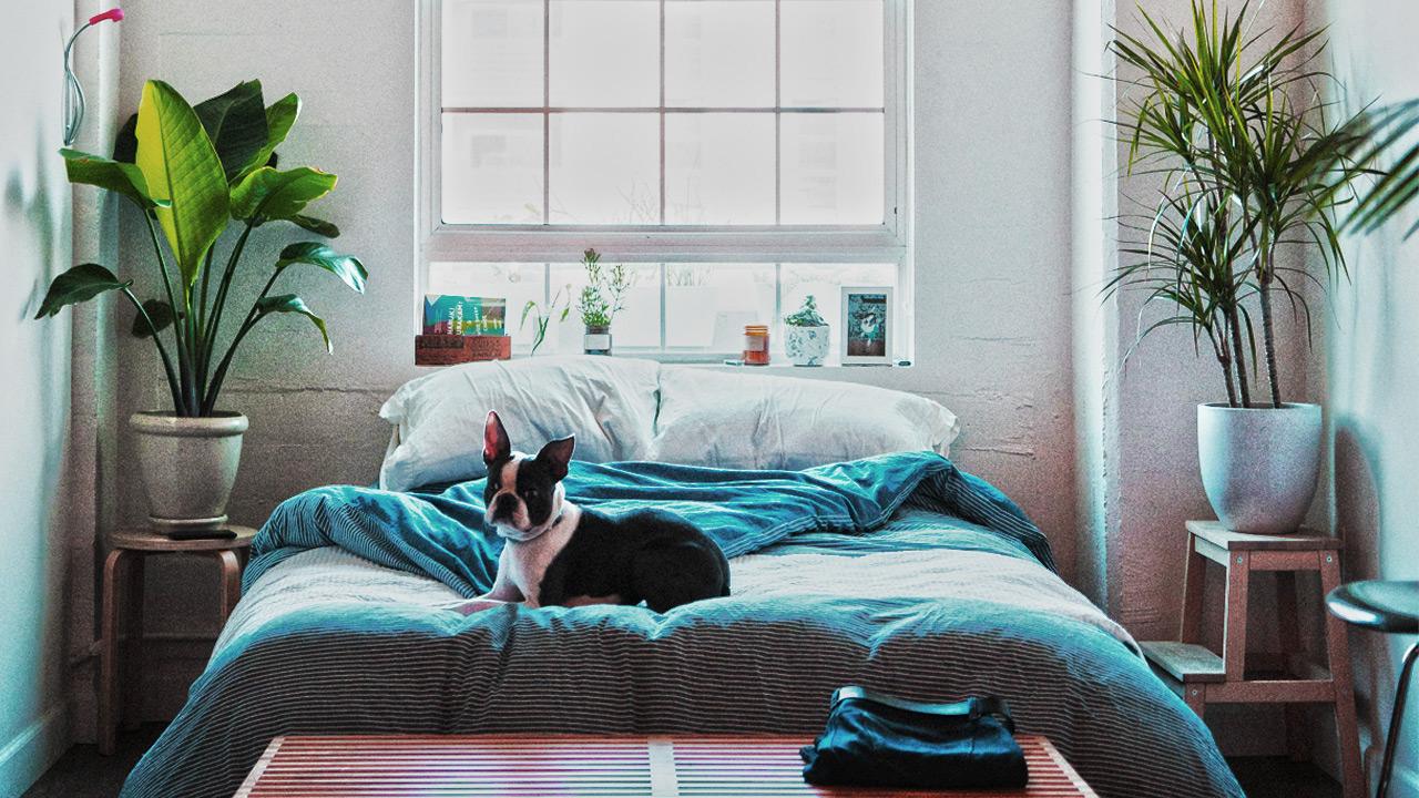 Pflanzen im schlafzimmer auf geht 39 s ins gr ne schlafgemach hongi blog - Luftfeuchtigkeit im schlafzimmer senken ...