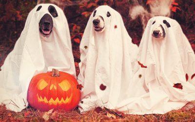 3 kreative Deko-Ideen für Halloween