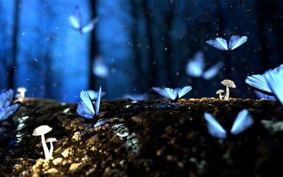 REM-Schlaf, Träume & Gedächtnis: So erinnerst du dich besser an nächtliche Abenteuer