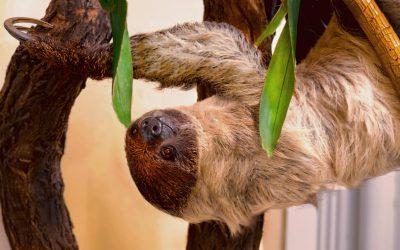 HONGi Interview: Tierpflegerin Petra Stefan über die Faultiere im Zoo Schönbrunn