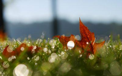 5 Dinge, die du im Herbst unbedingt tun solltest