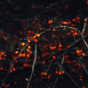 Gesund durch den Herbst Blog