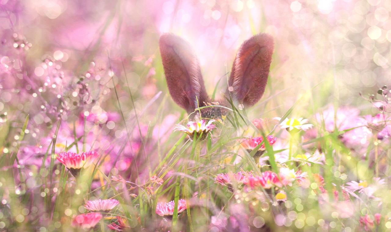 Die Geheimnisse des Osterhasen: Hoppelt er um die ganze Welt?
