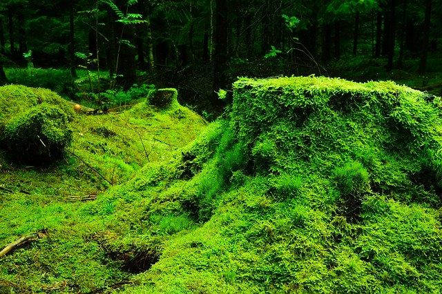 Wald Waldschätze