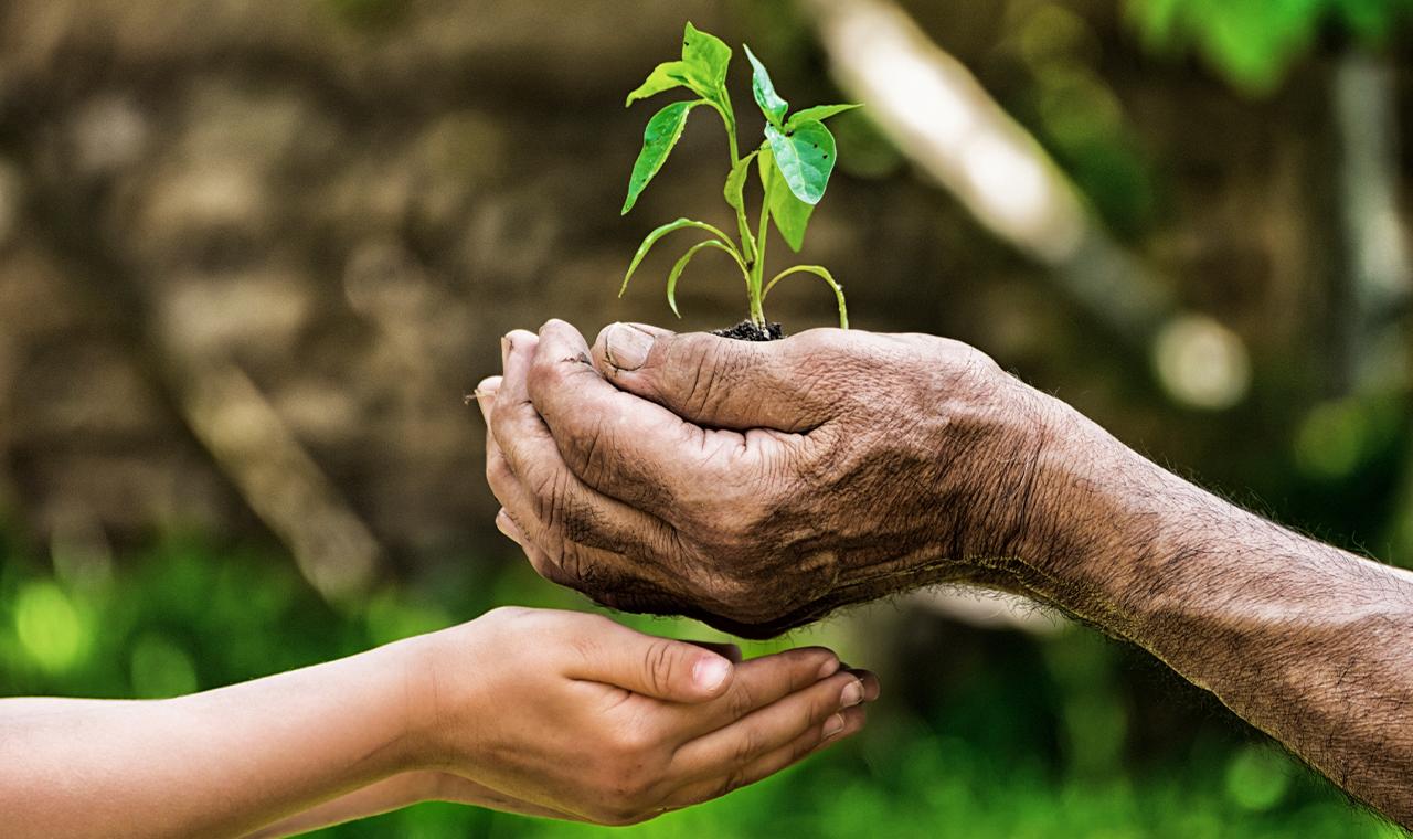 HONGi Baumtraum: Eine Kooperation mit dem Jane Goodall Institut Austria