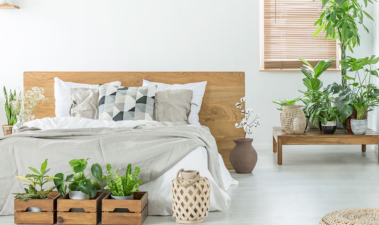 Flower Power: Entdecke die Kraft der Pflanzen im Schlafzimmer