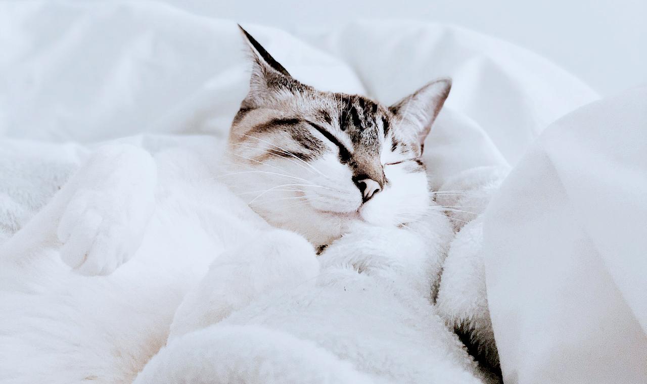 Im Bett mit einer Samtpfote: Vorteile und Nachteile
