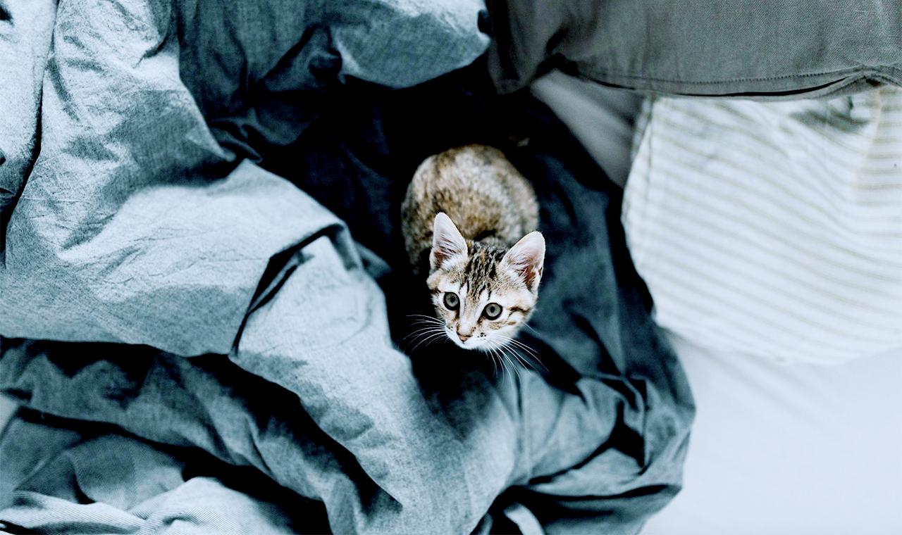 Katze-im-Bett-Hygiene-Gesundheit-Schlaf